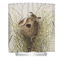 Nuttall's Lesser-marsh Wren  Shower Curtain by John James Audubon