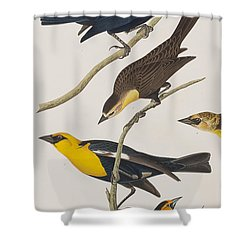 Nuttall's Starling Yellow-headed Troopial Bullock's Oriole Shower Curtain by John James Audubon