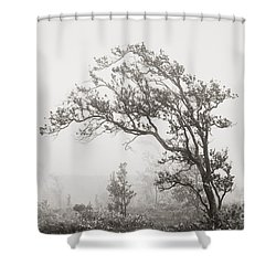 Ohia Lehua Tree Shower Curtain by Greg Vaughn - Printscapes