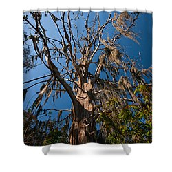 Old Cypress Shower Curtain by Christopher Holmes
