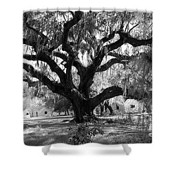 Old Plantation Tree Shower Curtain by Melody Jones