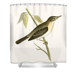 Olivaceous Warbler Shower Curtain by English School