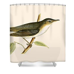 Olive Tree Warbler Shower Curtain by English School
