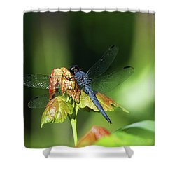 On A Leaf Shower Curtain by Karol Livote