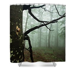 One Day Of The Snail's Life Shower Curtain by Evgeni Dinev