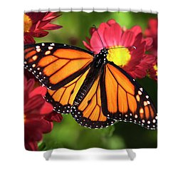 Orange Drift Monarch Butterfly Shower Curtain by Christina Rollo