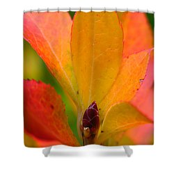 Orange Leaves Shower Curtain by Juergen Roth
