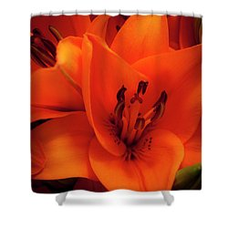 Orange Lily Shower Curtain by David Patterson