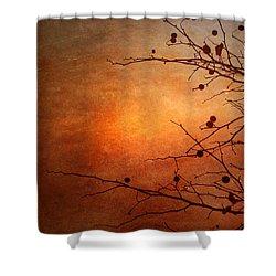 Orange Simplicity Shower Curtain by Tara Turner
