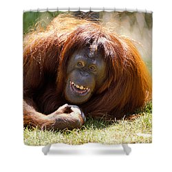 Orangutan In The Grass Shower Curtain by Garry Gay