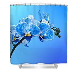 Orchid Blue Shower Curtain by Mark Rogan