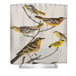 Orioles Thrushes And Goldfinches Shower Curtain by John James Audubon
