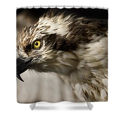 Osprey Shower Curtain by Adam Romanowicz