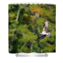 Osprey Shower Curtain by Bill Wakeley