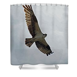 Osprey In Flight Shower Curtain by Ernie Echols