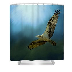 Osprey In The Evening Light Shower Curtain by Jai Johnson