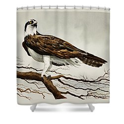 Osprey Sea Hawk Shower Curtain by James Williamson