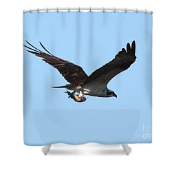Osprey With Fish Shower Curtain by Carol Groenen