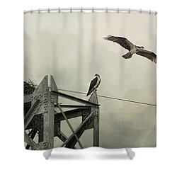 Ospreys At Pickwick Shower Curtain by Jai Johnson
