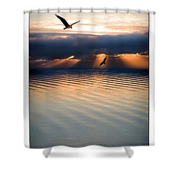 Ospreys Shower Curtain by Mal Bray