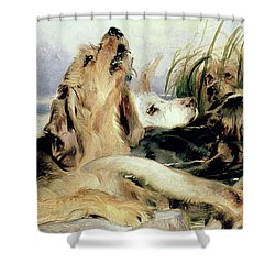 Otter Hounds Shower Curtain by Sir Edwin Landseer