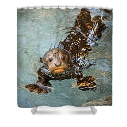 Otter Pup Shower Curtain by Jamie Pham