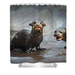 Otter Pup Pair Shower Curtain by Jamie Pham