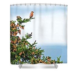 Out On A Limb # 2 Shower Curtain by Matt Plyler