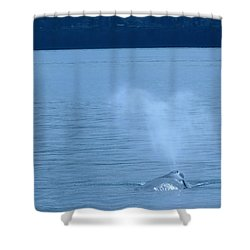 Out The Blow Hole  Shower Curtain by Jeff Swan