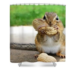 Overstuffed Shower Curtain by Lori Deiter
