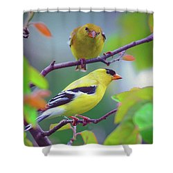 Shower Curtain featuring the photograph Pair Of Goldfinches by Rodney Campbell