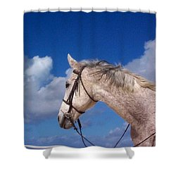 Pancho Shower Curtain by Mary-Lee Sanders