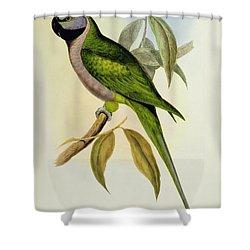 Parakeet Shower Curtain by John Gould
