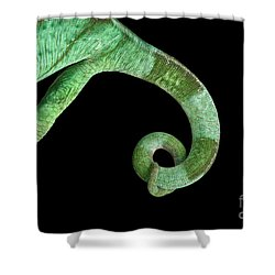 Parson Chameleon, Calumma Parsoni On Black Background, Top View Shower Curtain by Sergey Taran