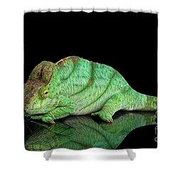 Parson Chameleon, Calumma Parsoni Orange Eye On Black Shower Curtain by Sergey Taran