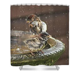 Pass The Towel Please: A House Sparrow Shower Curtain by John Edwards