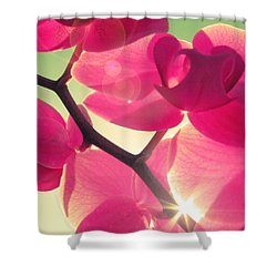Passionato Shower Curtain by Amy Tyler