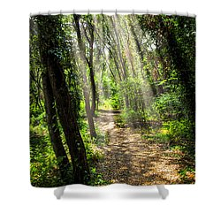 Path In Sunlit Forest Shower Curtain by Elena Elisseeva