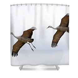 Pattern Of Two Shower Curtain by Mike Dawson
