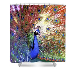 Peacock Wonder, Colorful Art Shower Curtain by Jane Small