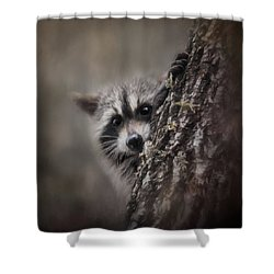 Peekaboo Raccoon Art Shower Curtain by Jai Johnson