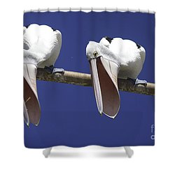 Pelican Burp Shower Curtain by Avalon Fine Art Photography