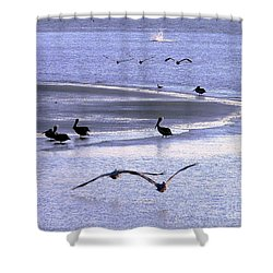 Pelican Island Shower Curtain by Al Powell Photography USA