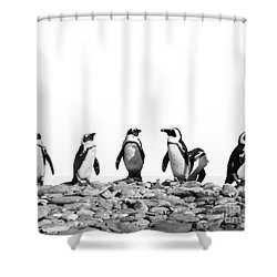 Penguins Shower Curtain by Delphimages Photo Creations