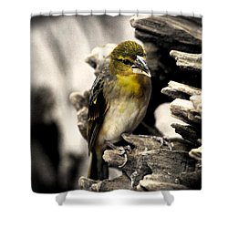 Perched Shower Curtain by Martin Newman