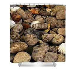 Petoskey Stones With Shells L Shower Curtain by Michelle Calkins