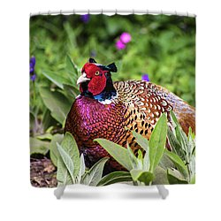 Pheasant Shower Curtain by Martin Newman