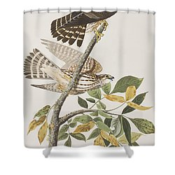 Pigeon Hawk Shower Curtain by John James Audubon