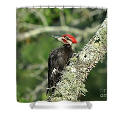 Pileated Perch Shower Curtain by Al Powell Photography USA