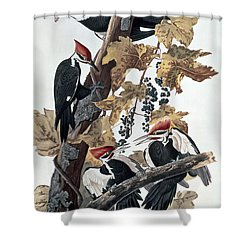 Pileated Woodpeckers Shower Curtain by John James Audubon